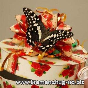 Живые экзотические бабочки для подарка в Кременчуге